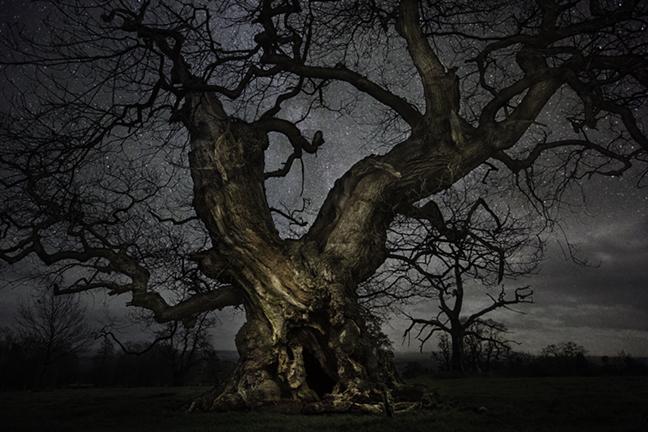 Oak Tree , UK